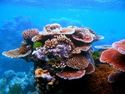 Do nothing to stem global warming, and some hardy coral will live on